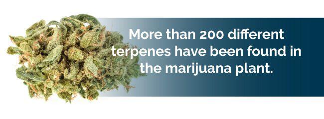 over 200 different terpenes exist