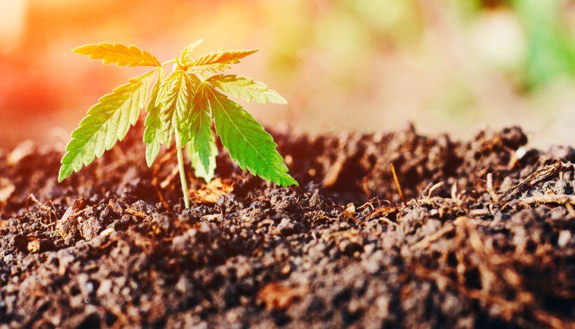 best soil