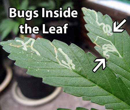 bugs on leaf