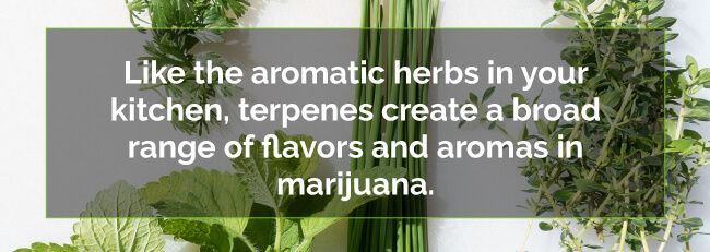cannabis smell comes from terpenes