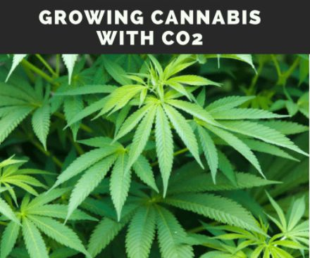 growing with co2