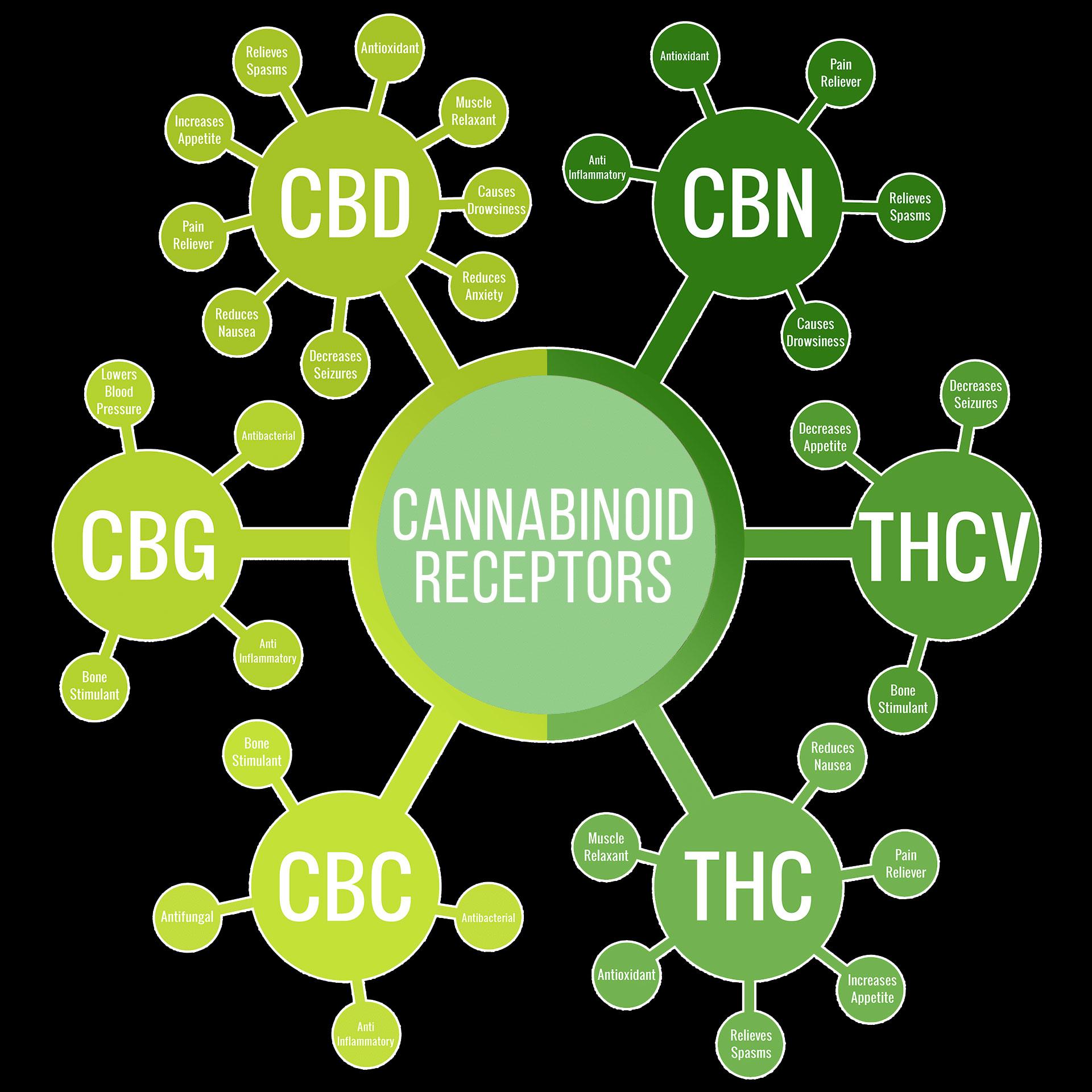 different cannabinoids