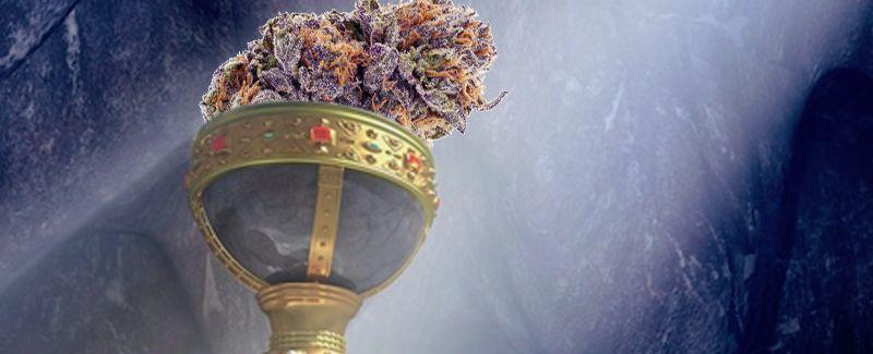 holy grail purple bud