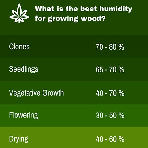 humidity levels for cannabis