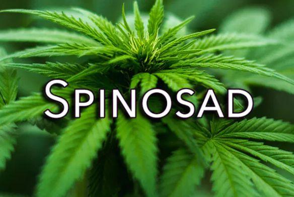 Spinosad