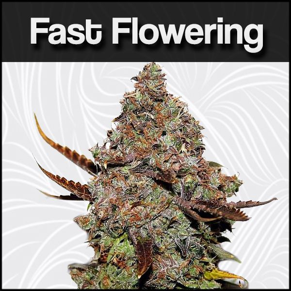 Fast Flowering Seeds