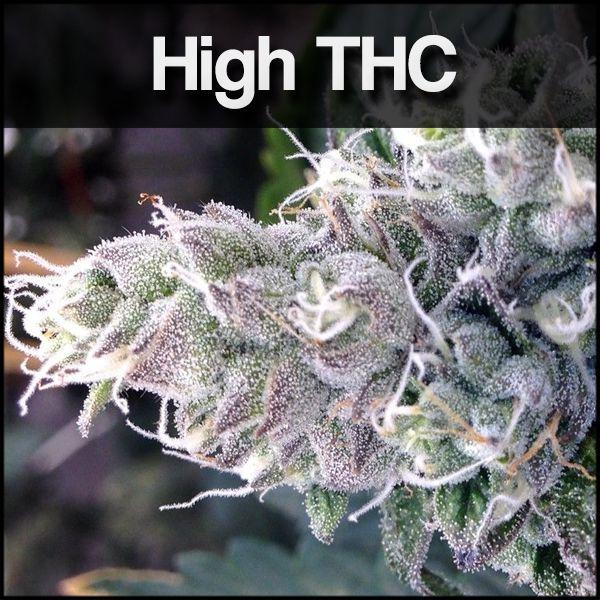High THC Seeds