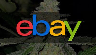 cannabis seeds and ebay