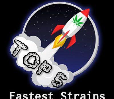 fastest flowering strains in 2021