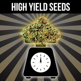 highest yielding strains in 2021