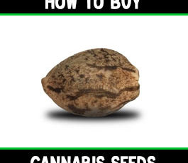 how to buy cannabis seeds