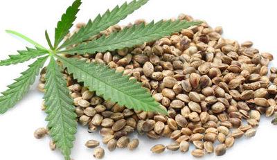 buying quality bulk seeds