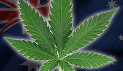 how-to-buy cannabis seeds australia